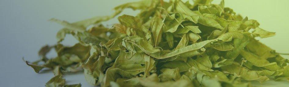 Fresh Kratom Leaves